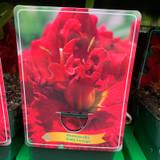 Hemerocallis 'Ruby Corsage' (p11)