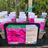 Phlox subulata Emerald Pink 1ltr