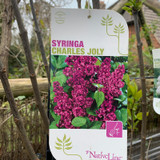 Syringa 'Charles Joly' 10ltr (Lilac)