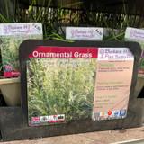 Deschampsia 'Pixie Founatin' 1ltr (Grass)