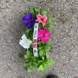 Petunia (10 pack)