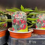 Chilli Plants - 9cm