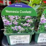 Nemesia 'Confetti' 9cm