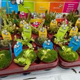 Carniflorious plant (mix)