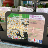Leucanthemum x superbum Snowbound-1ltr