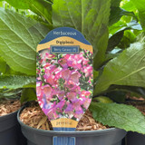 Digiplexis 'Berry Canary'