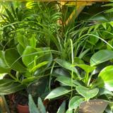 Easy care houseplant mix