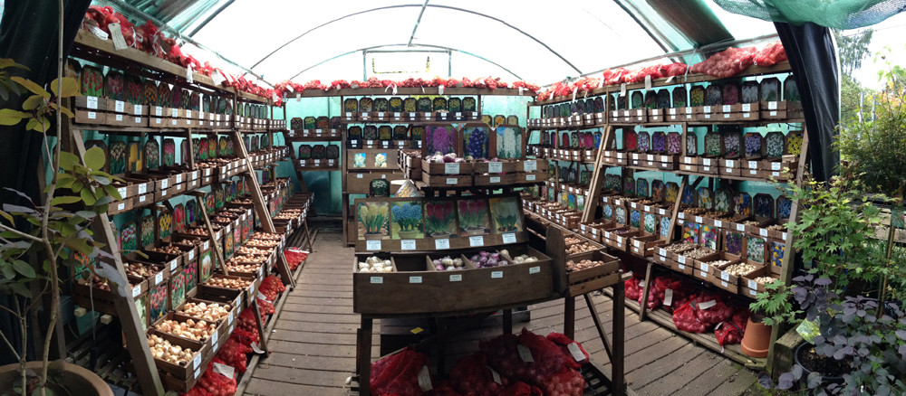 View of our bulbs polytunnel