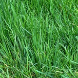 Johnsons 'Luxury Lawn' lawn seed - 10kg (for 400sq m)