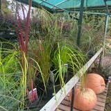 Grasses - mixed varieties 3L