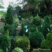 Top Topiary