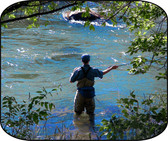 Fly Fishing The Rockies