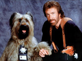 Chuck Norris And Dog 8 x 10 Photo