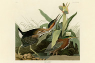 John Audubon Print - Green Heron
