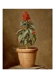 Potted Plant - Henri Horace Roland De La Porte