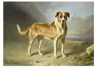Bernard Te Gempt - St Bernard Dog