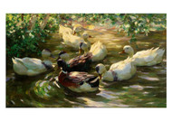 Alexander Koester - Ducks on a Pond