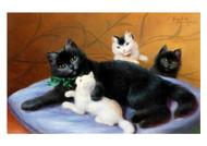 Sophie Sperlich - Cat Family