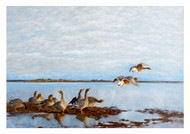 Bruno Liljefors - Geese