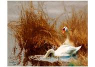 Bruno Liljefors - Swans