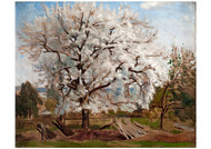Carl Fredrik Hill - Apple Tree in Blossom
