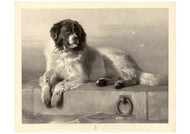 Thomas Landseer - A Distinguished Member of the Humane Society