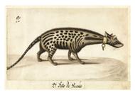 Anonymous - Civet
