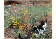 Bruno Liljefors - Cat on a Flowery Meadow