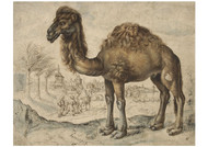 Maerten de vos - Dromedary in an Eastern Landscape with a City