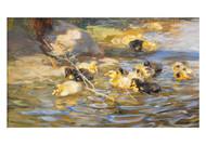 Rudolf Schramm Zittaus - Ducks