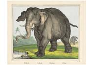 Scotti Firma Jos Scholz - Elephant