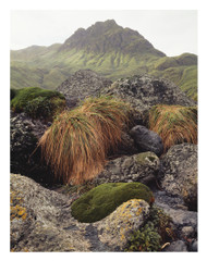 Macquarie Island, Tasmania 1984 by Peter Dombrovskis