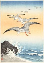 Five Seagulls Above Raging Sea