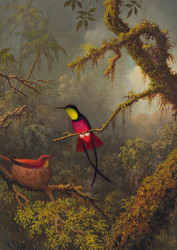 A Pair of Nesting Crimson Topaz Hummingbirds