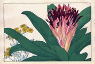 Ananas and Chineraria Marichima