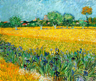 Field with Flowers near Arles