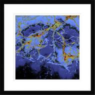 Framed Nausithoe by Dieter Matthes