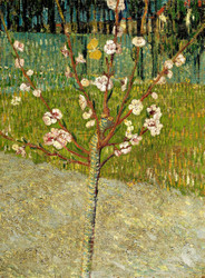 Almond Tree in Blossom by Vincent van Gogh Premium Giclee