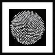 Framed Hypnosis by Giorgio Toniolo