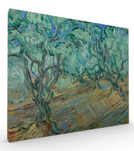Olive Grove II by Vincent van Gogh Stretched Canvas