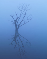 Tree Shadow by Jeff Grant Landscape Print