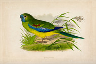 WT Greene Parrots in Captivity Turquoisine Wildlife Print