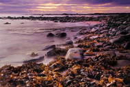 Seascape Print Seaweed Rocks by Jeff Grant