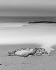 Turimetta 37 by Jeff Grant Seascape Print