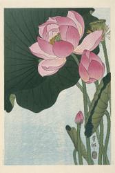 Blooming Lotus Flowers by Ohara Koson  Floral