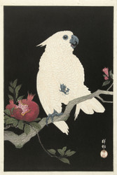 Japanese Print Cockatoo and Pomegranate by Watanabe Shozaburo