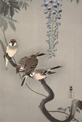 Japanese Print Tree Sparrows in Wisteria by Ohara Koson Art