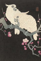 Japanese Print Two Cockatoos on Branch with Plum Blossom by Watanabe Shozaburo Art