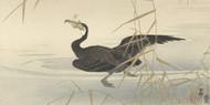 Cormorant with Fish by Ohara Koson Japanese Woodblock