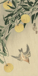 Cuckoo in the Rain by Ohara Koson Japanese Woodblock